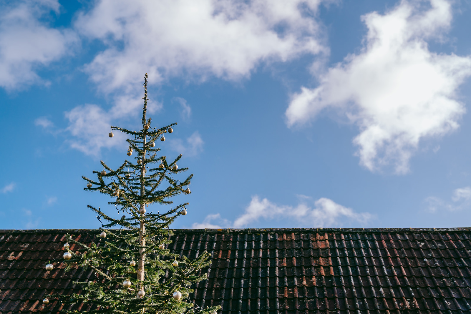 The top of a christmas tree above the barn roof