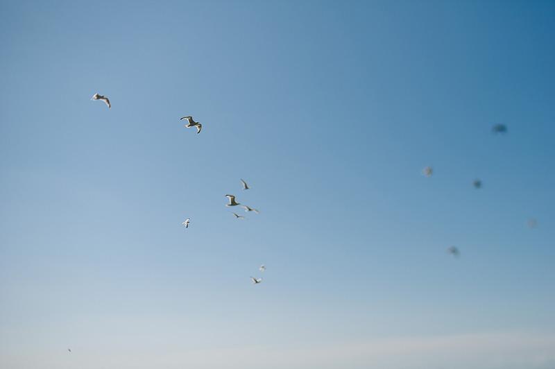 seagulls against a blue sky