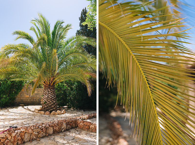 a palm tree and a close up of a palm frond